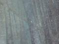 Visión del bosque intemporal - Trinidad Formoso Escotet